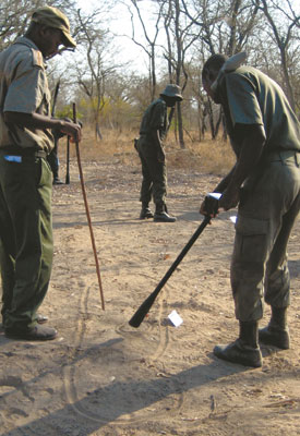 Ranger trainees practice reading 'spoor', which includes identifying tracks and droppings (both animal and human).